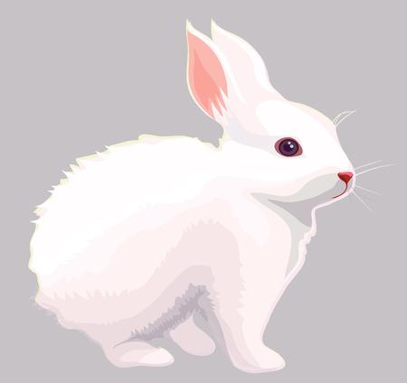 白ウサギ  イラスト・ベクター素材