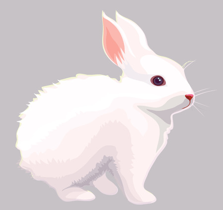 lapin silhouette: Lapin blanc Illustration