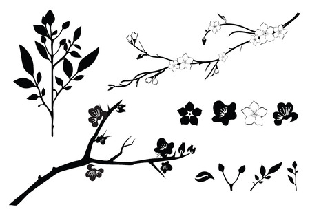 awakening: Branch with flowers isolated on white
