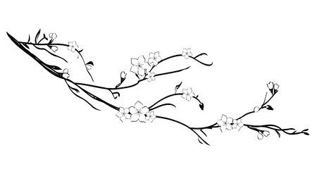arboles blanco y negro: Blooming rama de cerezo
