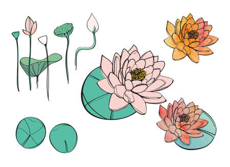 Hand drawn flowers of lotus or water lily, vector illustration, decoration, yoga studio, beauty
