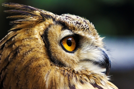 Bird s-Eye View