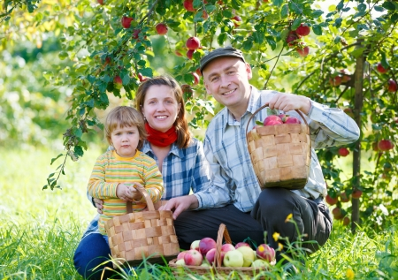 harvests: happy family harvests of apples
