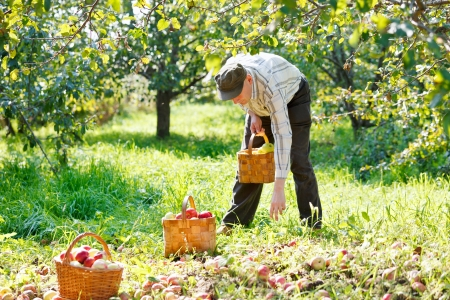 adult man in the garden Stock Photo - 16011173