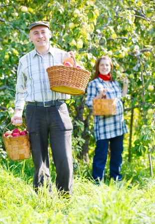 happy couple in the garden harvests Stock Photo - 16192273