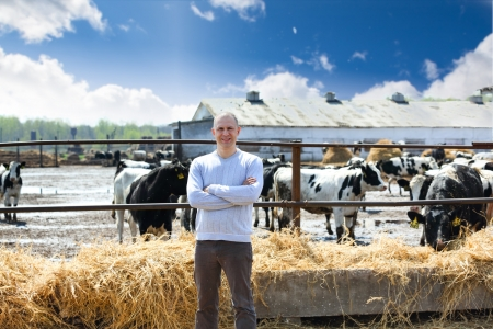 man on the farm cows Archivio Fotografico
