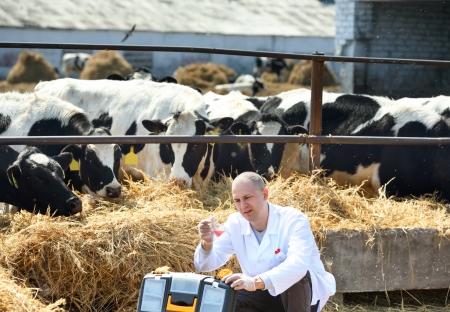 Doctor   in cow farm