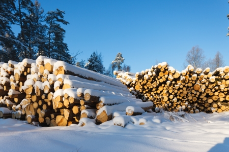 firewood under the snow in winter forest Stock Photo