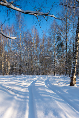trail in winter forest photo
