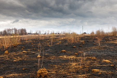 bushfire: A forrest after a bushfire Stock Photo