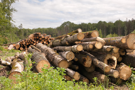 deforested: Large Lumber Pile from deforested rural area  Stock Photo