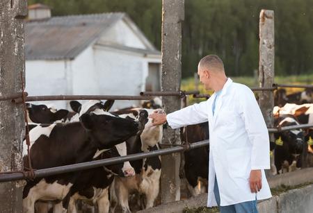 kine: positive man on the farm cows