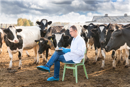 Veterinary Doctor working on a laptop  on farm cows