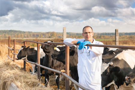 Doctor in glasses among a herd of cows