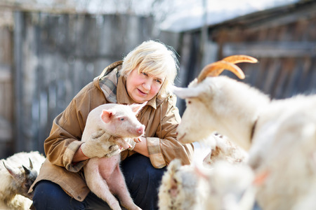 Fun adult woman holding a small pig on the farm