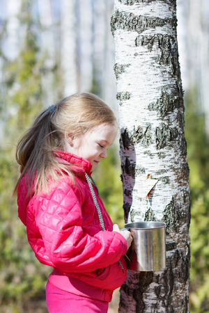 sap: little girl collects birch sap in woods