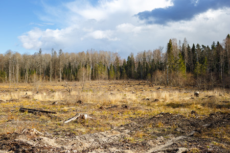 deforested: meadow with stumps after felling hack woods Stock Photo