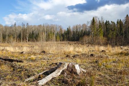 deforestacion: Maderas de tala toc�n despu�s de maderas de hackers deforestaci�n