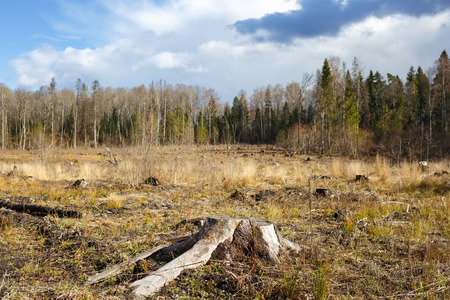 hack: Woods logging  stump after deforestation hack woods