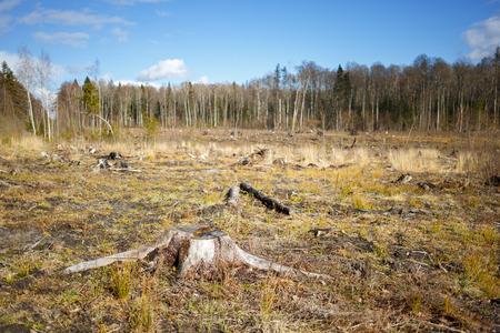 deforested: Woods logging  stump after deforestation hack woods