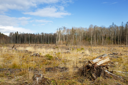 hack: meadow with stumps after deforestation hack woods Stock Photo