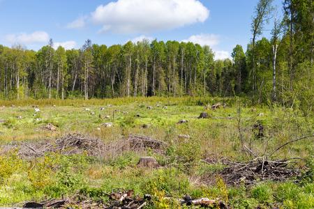 logging: Woods logging  stump after deforestation hack woods