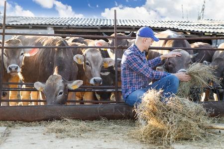 operative: Portrait of a positive male farmer on a farm near cows