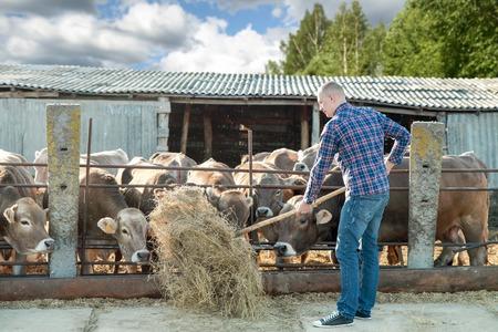 jornada de trabajo: hombre que trabaja en el ganado de la granja en un d�a soleado Foto de archivo
