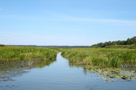 quagmire: way through  swamp Stock Photo