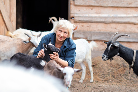 Elderly woman with a herd of goats