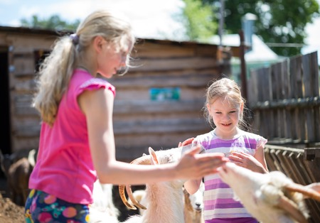 sissy: children feed the animals on the farm Stock Photo