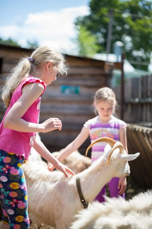 kindred: Two little girl with goat on the farm
