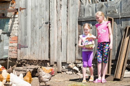 kindred: children feed the animals on the farm Stock Photo