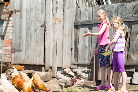 kindred: children fed chickens grain on the farm