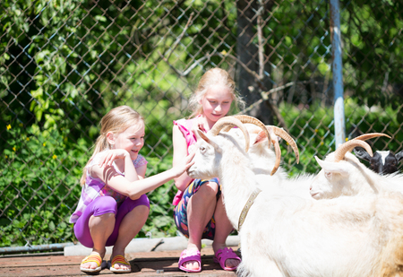 kindred: children playing with a goat at farm Stock Photo