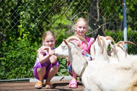 kindred: two sisters children playing with a goat at farm Stock Photo