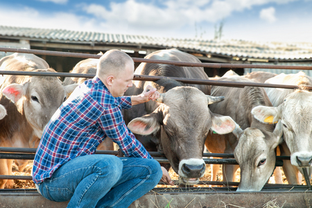kine: Farmer is working on farm with dairy cows Stock Photo