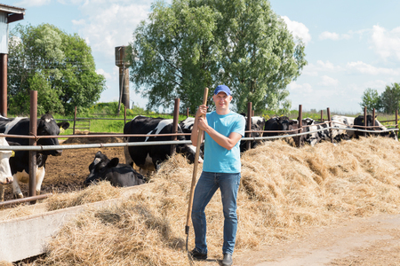 Farmer is working on farm with dairy cows Stock Photo