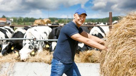Farmer is working on farm with dairy cows Reklamní fotografie
