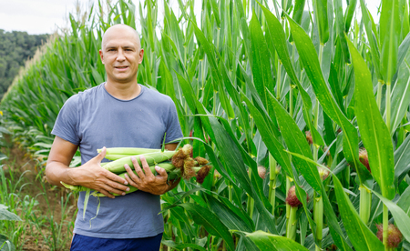 man with corn crop in a field