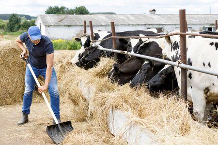 Farmer on farm with dairy cow Reklamní fotografie