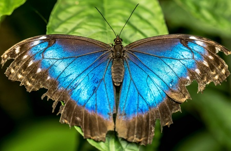 Closeup of a Butterfly Stock Photo