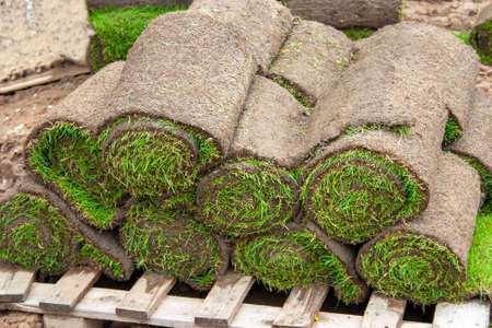 Rolled turf on pallets for laying a fresh green turf Standard-Bild