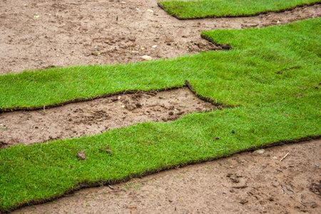 Turf - Laying green turf using rolled turf Standard-Bild