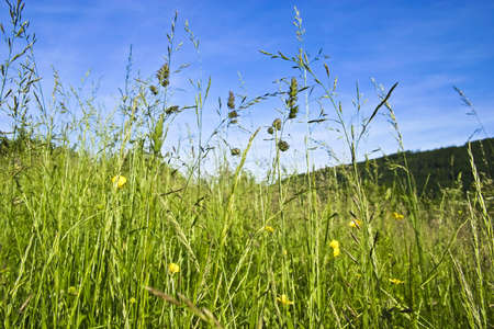 Meadow with flowers and grasses in summer