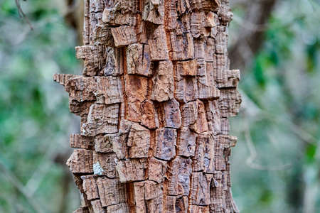 Details of the fire resistant bark of an exotic topical tree at the buraco das aras, Brazil, with a very rugged textured surface pattern Stock fotó