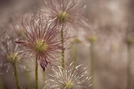 colorize: closeup flowers