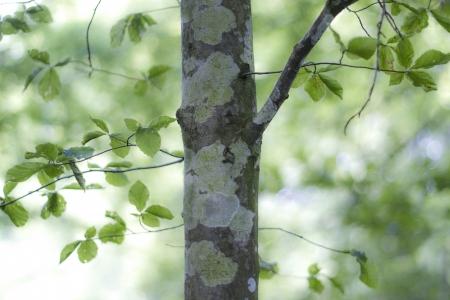 arboles frondosos: cerca del árbol