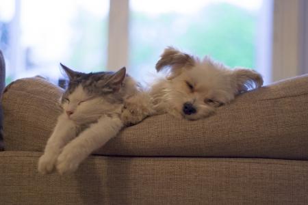 고양이와 개는 서로 옆에 자고 스톡 콘텐츠
