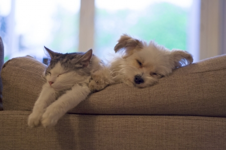 cat and dog sleeping beside eachother photo